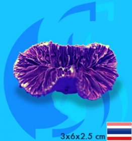 SeaSun DreamMagic (Decoraction) Frogspawn Coral Metallic Purple FRO-02-MP