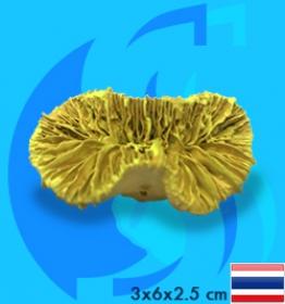 SeaSun DreamMagic (Decoration) Frogspawn Coral Metallic Yellow FRO-02-MY