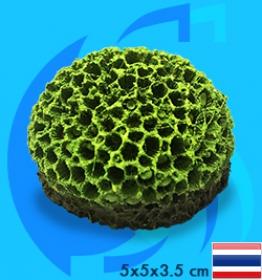 SeaSun DreamMagic (Decoration) Goniopora Coral GON-01-MG