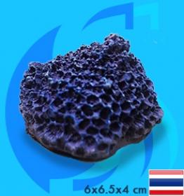 SeaSun DreamMagic (Decoration) Goniopora Coral GON-02-B