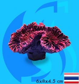 SeaSun DreamMagic (Decoration) OpenBrain Coral OPE-01-MP