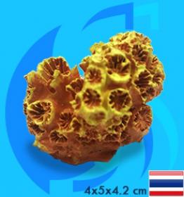 SeaSun DreamMagic (Decoration) Sun Coral SUN-01-MY