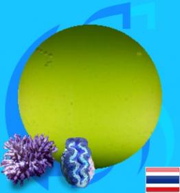 SeaSun (Coral Food) Live PhytoPlankton 5000ml