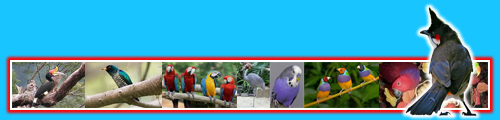 Bird Product
