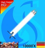 AquaLight (T5 Bulb) T5HO 10000k 54w (White 10000k)