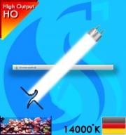 Korallen-Zucht (T5 Bulb) Coral Light New Generation 39w (White 14000k)