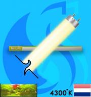 Philips (Fluorescent Bulb) Super80 TL-D 840 (T8 4000k 18w)