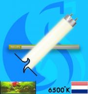 Philips (Fluorescent Bulb) Super80 TL-D 865 (T8 6500k 36w)