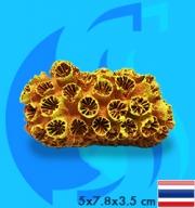 SeaSun DreamMagic (Decoration) Sun Coral SUN-02-MY