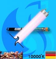 Sylvania (Fluorescent Bulb) Aquastar (T8 10000k 36w)